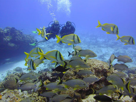 Tropical Honeymoon Destinations: Snorkelling in Cozumel